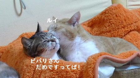 2011_0211花0006