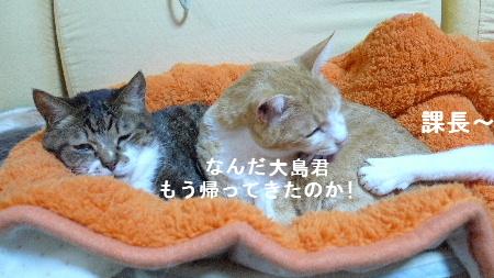 2011_0211花0025