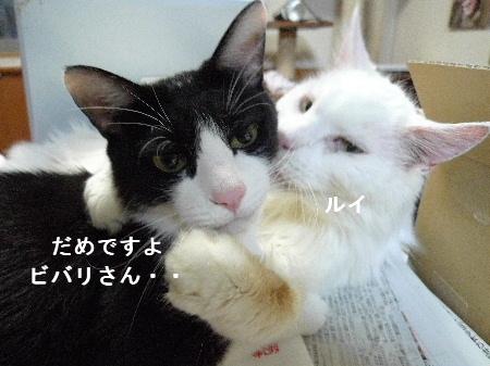 2011_0925ナッキー0001