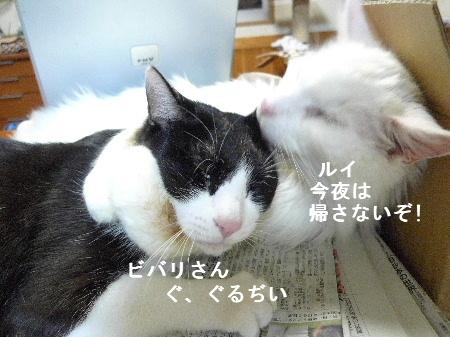 2011_0925ナッキー0005