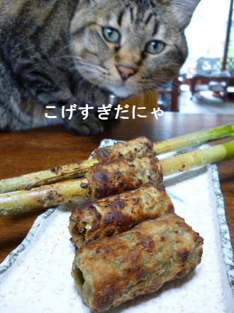 2011_1022ナッキー0024