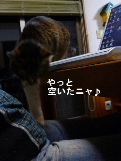 2011_1029ナッキー0064