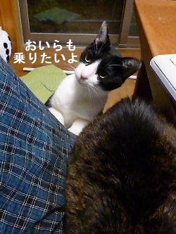 2011_1029ナッキー0080