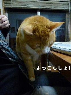 2011_1029ナッキー0096