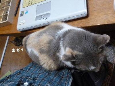 2011_1029ナッキー0128