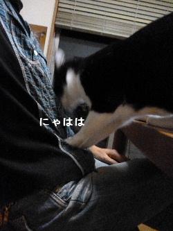 2011_1029ナッキー0117