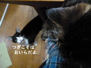 2011_1029ナッキー0122