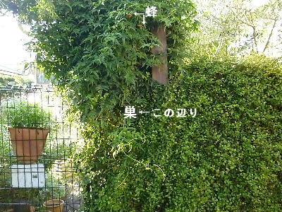 2011_1104ナッキー0014