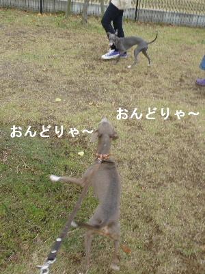 2011_1108ナッキー0019