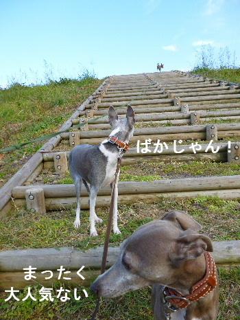 2011_1118ナッキー0035