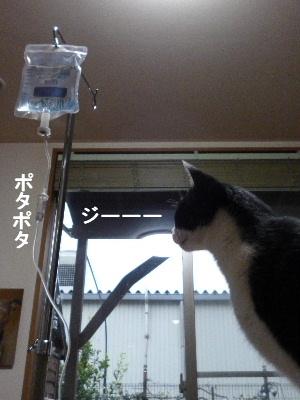 2011_1123ナッキー0061