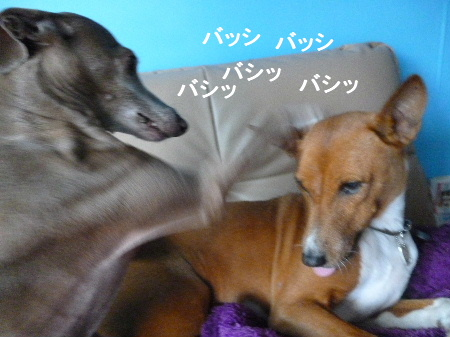 2011_1117ナッキー0032