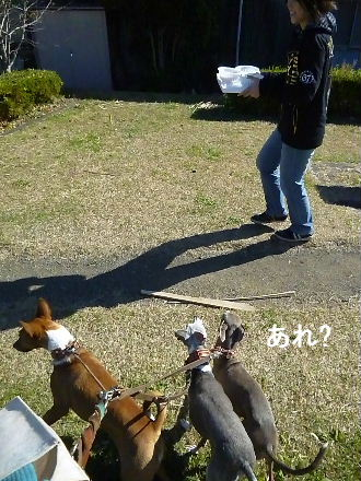 2011_1204ナッキー0021