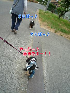 s翼くんと散歩