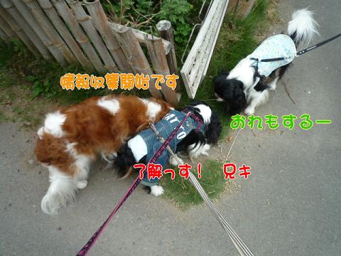 sお散歩道w