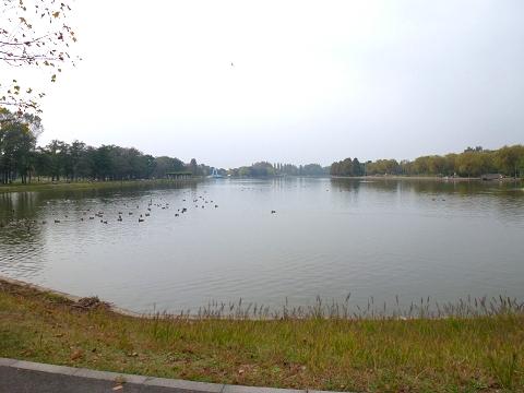 s水元公園の池?