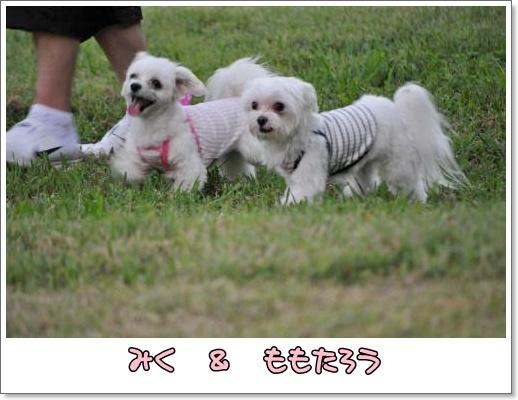 001-DSC_0285_convert_20100920230858.jpg
