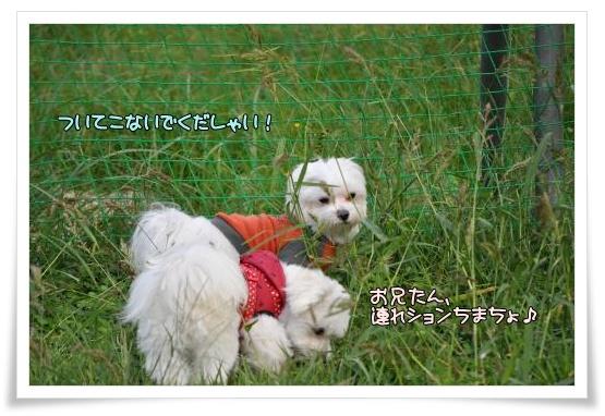 002-DSC_0285_convert_20101007204033.jpg