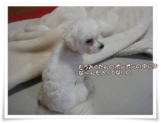 003-DSC00217_convert_20101101202602.jpg