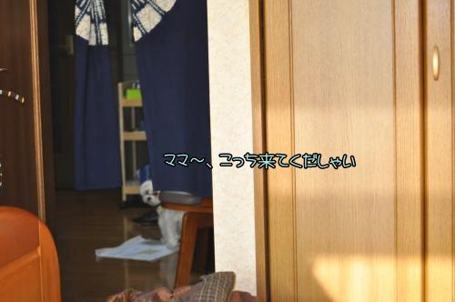 003-DSC_0113_convert_20101205155410.jpg