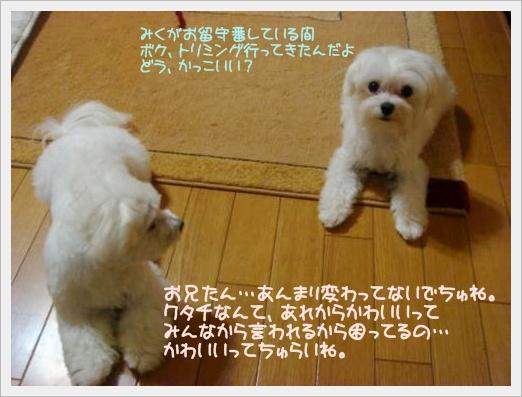 005-DSC00157_convert_20100911115719.jpg
