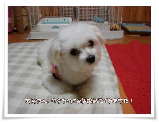 006-DSC00107_convert_20101005212418.jpg