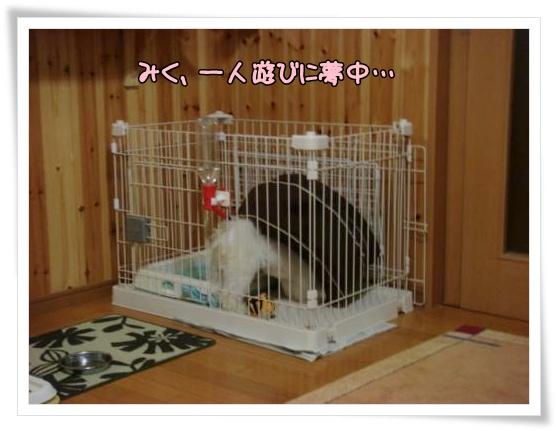 006-DSC00215_convert_20100918001021.jpg
