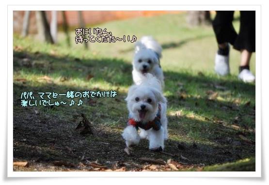 006-DSC_0059_convert_20101013220054.jpg