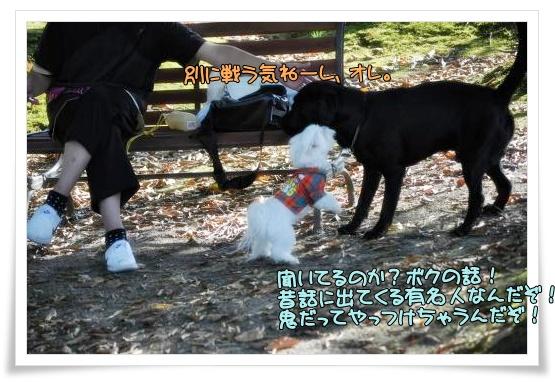 006-DSC_0152_convert_20101015225221.jpg