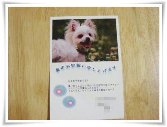 007-DSC00319_convert_20100804211240.jpg