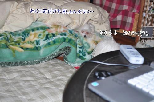 010-DSC_0350_convert_20101214220030.jpg
