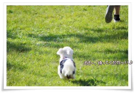 018-DSC_0091_convert_20101015221539.jpg