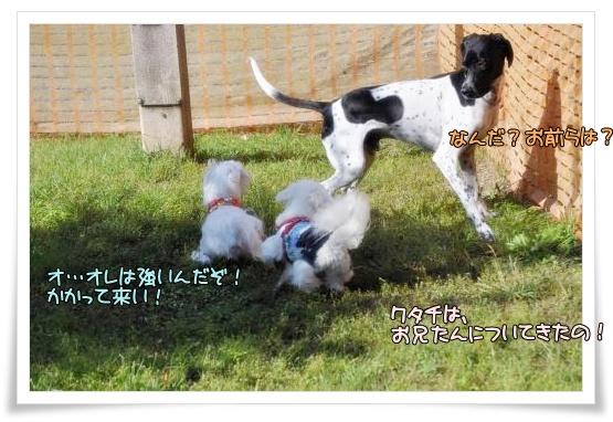 020-DSC_0112_convert_20101015221609.jpg