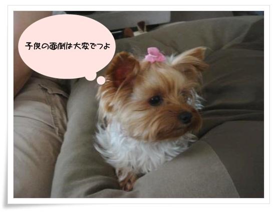 DSC00361_convert_20100904213415.jpg