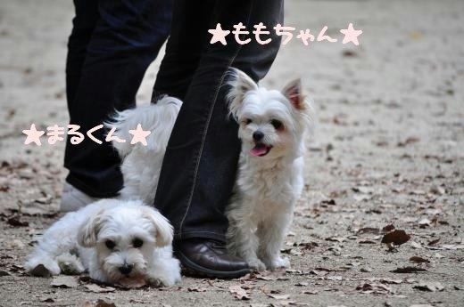 DSC_0075_convert_20100525201835.jpg
