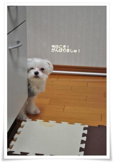 DSC_0120_convert_20110203212900.jpg