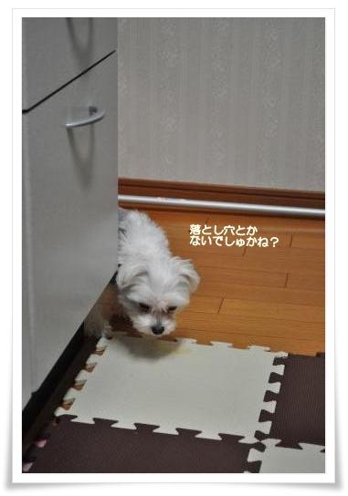 DSC_0129_convert_20110203212721.jpg