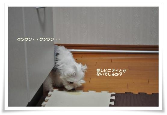 DSC_0134_convert_20110203212749.jpg