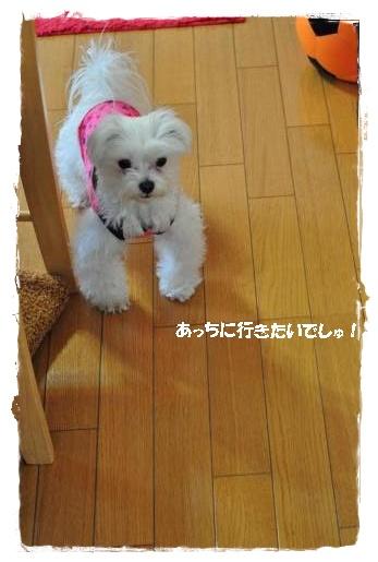 DSC_0226_convert_20110211094313.jpg