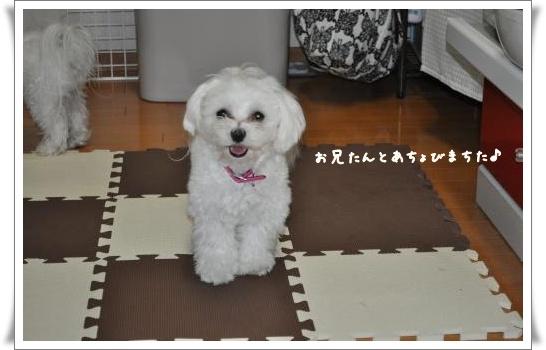 DSC_0226_convert_20110319212224.jpg