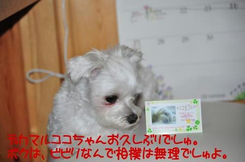 DSC_0235_convert_20100701210105.jpg