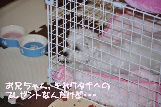 DSC_0302_convert_20100504093924.jpg