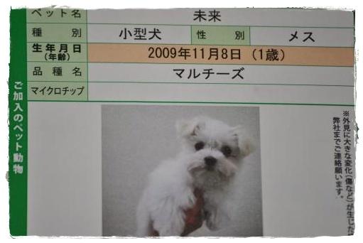 DSC_0377_convert_20110212140334.jpg