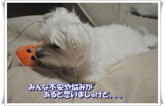 DSC_0543_convert_20110419213026.jpg