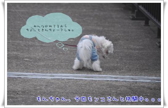 DSC_0583_convert_20110501090357.jpg