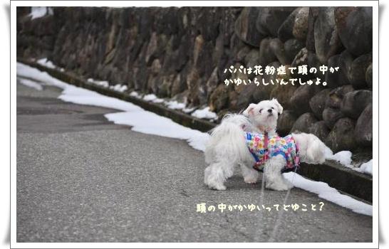 DSC_0665_convert_20110326085246.jpg
