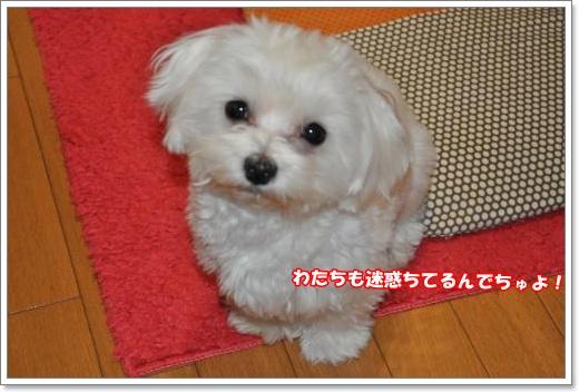 DSC_0697_convert_20110126221015.jpg