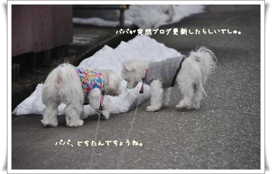 DSC_0702_convert_20110326084131.jpg