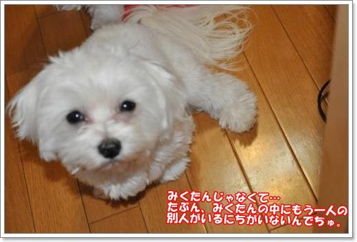 DSC_0717_convert_20110126220946.jpg