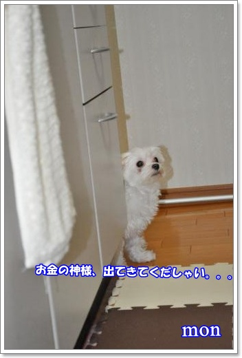 DSC_0901_convert_20110126213728_20110126224653.jpg